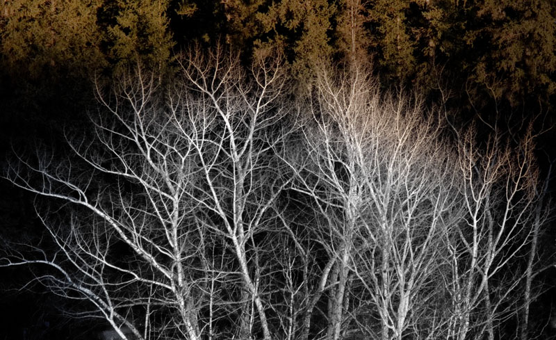 ghosts trees - Arbres fantômes